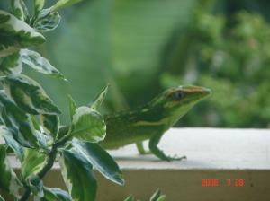 lizard_balcony 001