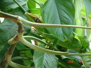 lizard_balcony 005