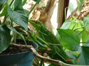 lizard_balcony 008